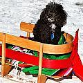 Winter Ride by Burney Lieberman