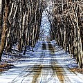 Winter Road by Rodney Campbell