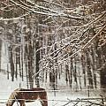 Winter Scene With Horse Grazing In Wooded Pasture by Sandra Cunningham