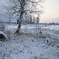Winter Scene With Snow-covered Grasses by Mattias Klum