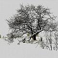 Winter Sentinel by Ron Jones