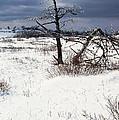 Winter Shenandoah National Park by Thomas R Fletcher