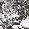 Winter Snow Along Still Creek In Mt by Craig Tuttle