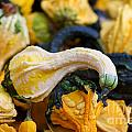 Winter Squash by Brooke Roby