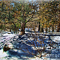 Winter Sun by Joan  Minchak