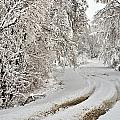 Winter Tracks by Edward Peterson