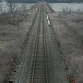 Winter Tracks  by Neal Eslinger