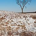 Winter Tree Nachusa Grasslands by Steve Gadomski