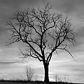 Winter Tree Silhouette by John Stephens