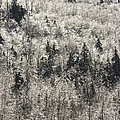 Winter Trees Covered In Ice by Keith Webber Jr