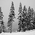 Winter Trees On Mount Washington - Bw by Marilyn Wilson