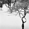 Winter Whisper by Simone Hester