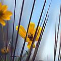 Winter Wildflowers by Shayne Johnson Fleming