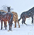 Winter Wonderland by Betsy Knapp