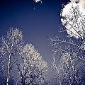 Winter Wonders by Matthieu Russell