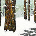 Wintering Pines by L J Oakes
