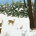 Wintering Whitetails by L J Oakes