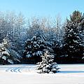 Winters Beauty by Ms Judi