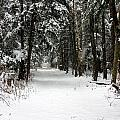 Winter's Path by Darlene Chissom
