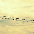 Wires With Many Birds On Them by Paulette B Wright