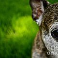 Wise Eye by Susan Herber
