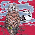 Wise Owl  by Andy  Estevez
