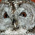 Wise Owl by LeeAnn McLaneGoetz McLaneGoetzStudioLLCcom