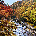 Wissahickon Creek In Fall by Bill Cannon