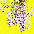 Wisteria Abstract by Deborah  Crew-Johnson