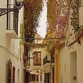 Wisteria Lane by Iain MacVinish
