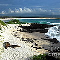Wizard Hill Beach by Fabian Romero Davila