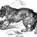 Wolf Attack by Granger