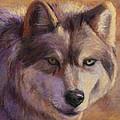 Wolf Study by Billie Colson