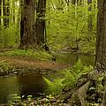 Wolfe's Pond Park On Staten Island by Nancy De Flon