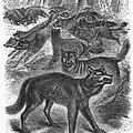 Wolves by Granger