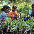 Women Grafting Mango Plants by Johnson Moya