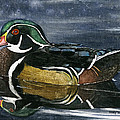 Wood Duck by Mary Tuomi