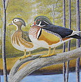 Wood Duck Pair At The Lake by Alan Suliber