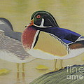 Wood Duck Pair Lakeside by Alan Suliber
