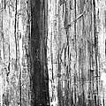 Wood Texture by Gaspar Avila