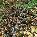 Wooded Creek by Susan Herber