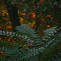 Wooded Dream  by Neal Eslinger