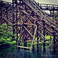 Wooded #rollercoaster At #cedarpoint In by Pete Michaud