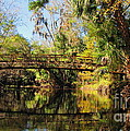 Wooden Bridge Over The Hillsborough River by Barbara Bowen