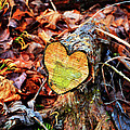 Wooden Heart by Paul Mashburn