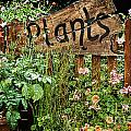 Wooden Plant Sign In Flowers by Simon Bratt Photography LRPS