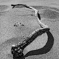 Wooden Serpent by Donna Blackhall