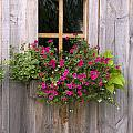 Wooden Shed With A Flower Box Under The by Michael Interisano