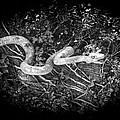 Wooden Snake by Ralf Kaiser