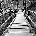 Wooden Stairs by Falko Follert